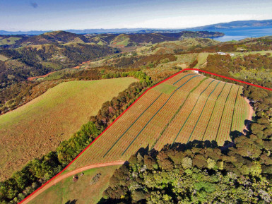 Vineyard, Restaurant and Wine Cellar  Business for Sale Waiheke Island