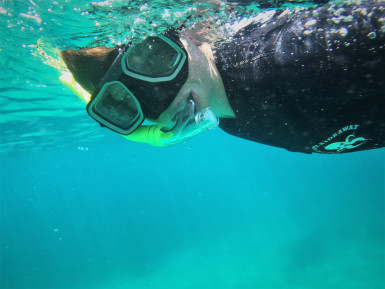 Snorkeling Adventure Business for Sale Leigh Auckland