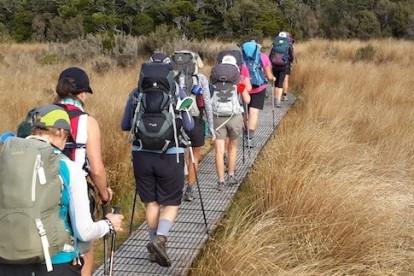 Eco Tourism Guided Walks Business for Sale Kahurangi National Park