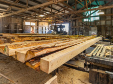 Sawmilling Business for Sale Nelson
