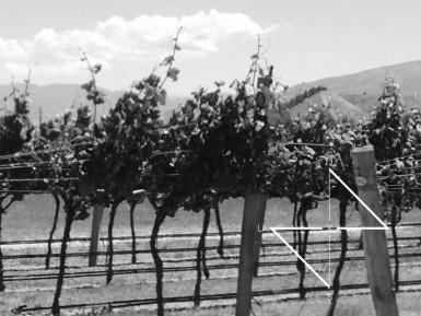 Prestigious Vineyard Business for Sale Otago