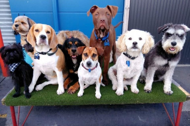 Doggy Daycare and Training Business for Sale Central Whangarei