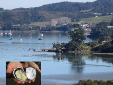 FHGC Oyster Farm Business for Sale Whangarei