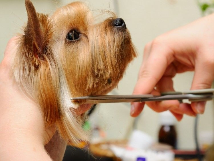 Dog Washing & Grooming Franchise for Sale New Zealand Wide