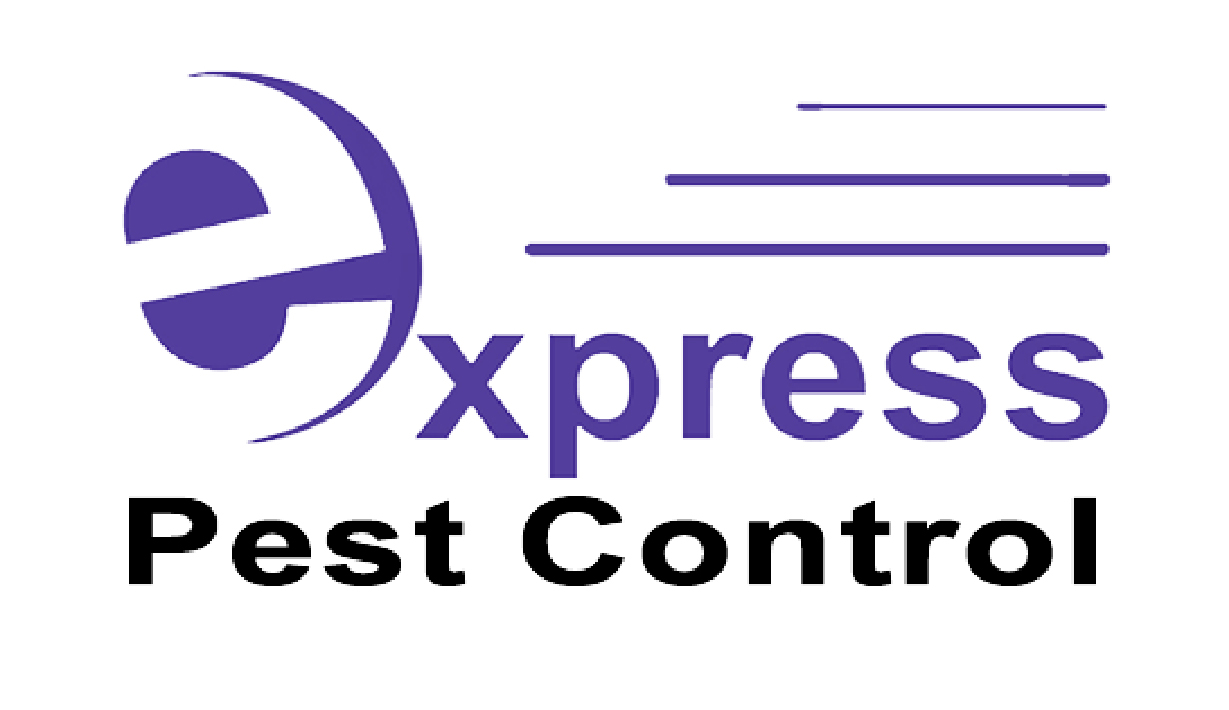 Express Pest Control Franchise for Sale New Zealand Wide