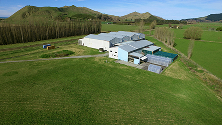 Coolstore Warehouse for Sale Gisborne