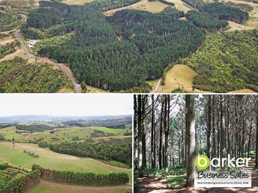 Land with Forestry Business for Sale Auckland