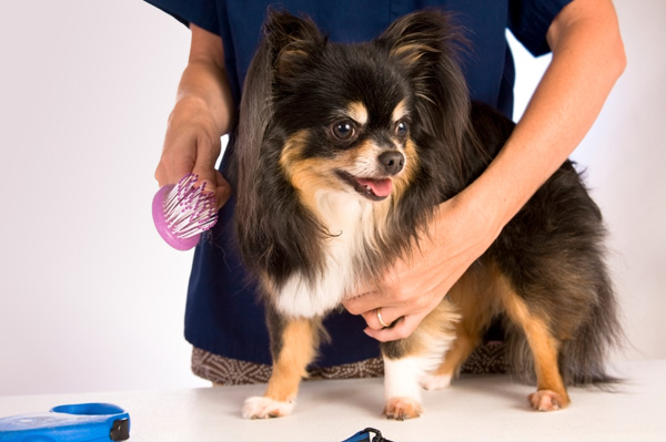 Dog Groomers Business for Sale Christchurch
