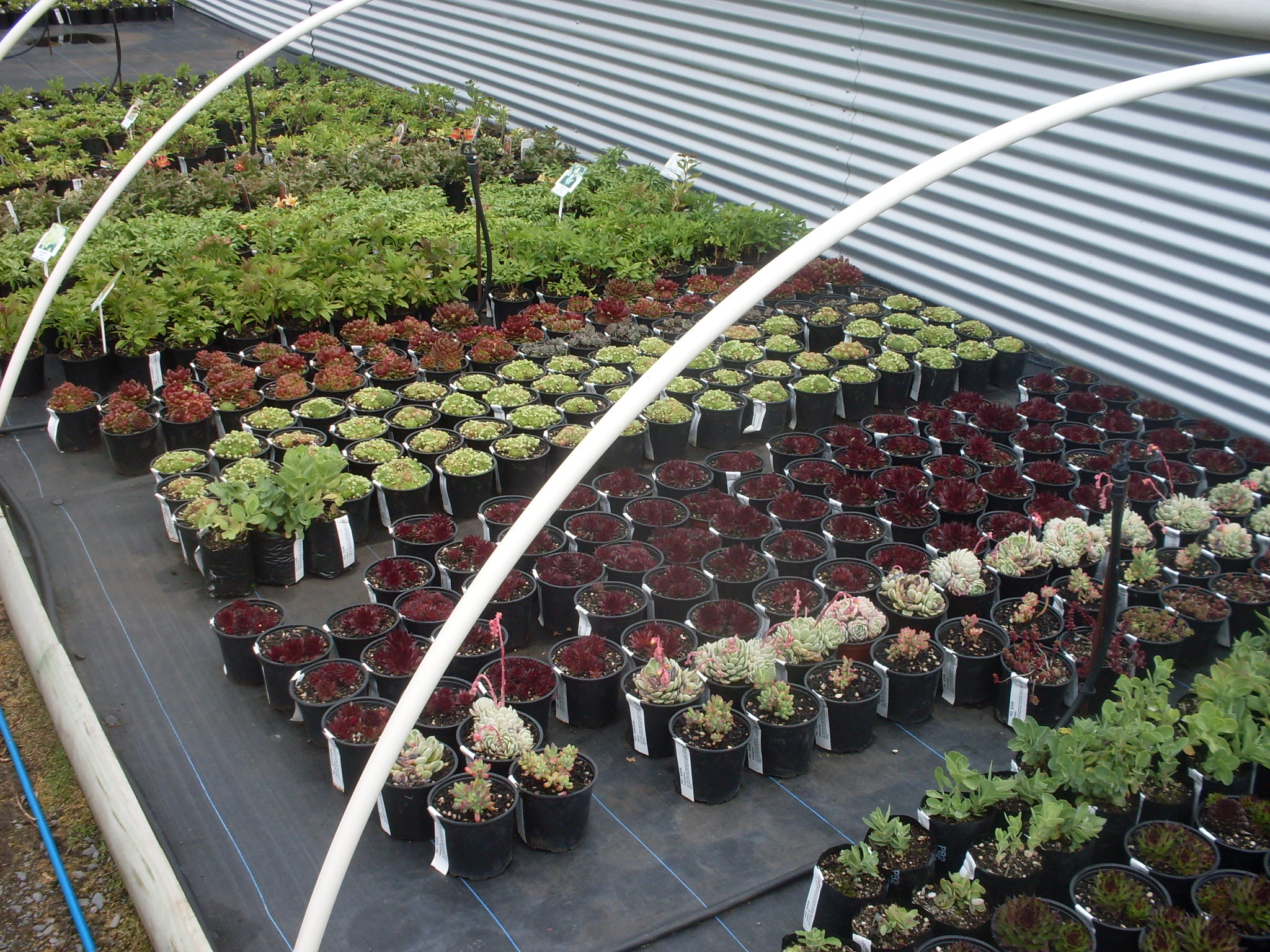 Wholesale Nursery Business for Sale Hunterville Wanganui