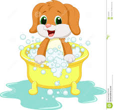 Dog Grooming Business for Sale Christchurch