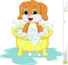 Dog Grooming  Business  for Sale/Lease