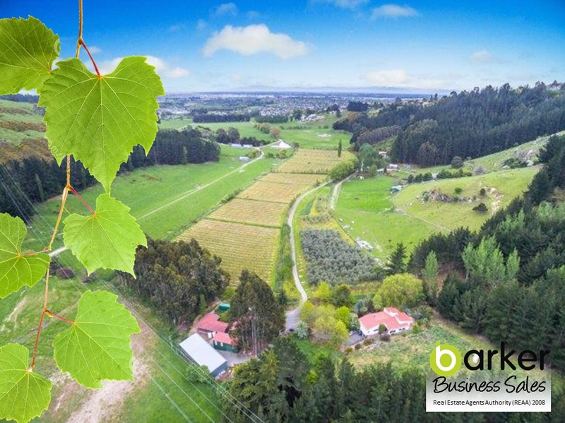 Vineyard and Winery Business for Sale Canterbury