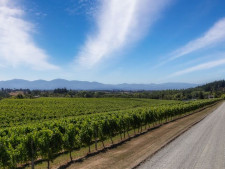 Winemaking and Liquor Distribution  Business  for Sale