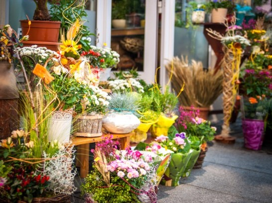 Florist  Business for Sale Auckland