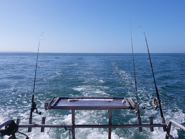 Fishing Charter Business for Sale Coromandel Town