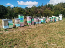 Beekeeping   Business  for Sale