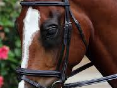 Equestrian Supplies Business for Sale Christchurch