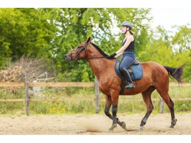 Saddlery Retail  Franchise  for Sale