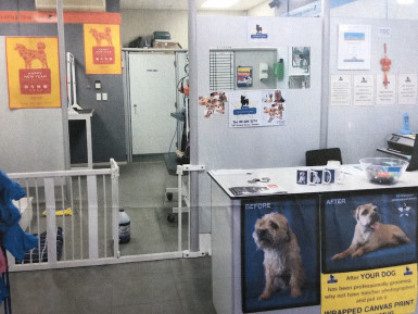 Dog Grooming Business for Sale Orewa Auckland