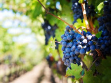 Wine Company and Vineyard  Business  for Sale