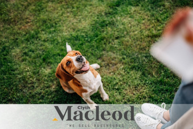 Doggie Daycare Business for Sale Auckland