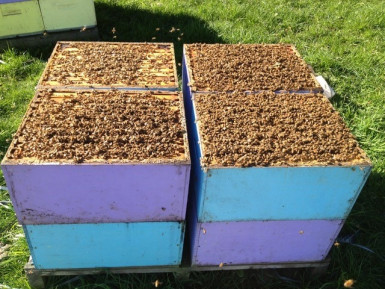 Bee Keeping Business for Sale Central North Island Locations