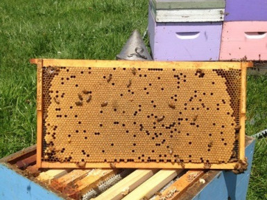 Bee Keeping  Business  for Sale