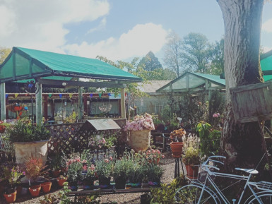Garden Centre Business for Sale Darfield